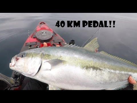Fishing The Ahipara Banks In New Zealand By Pedal Kayak!