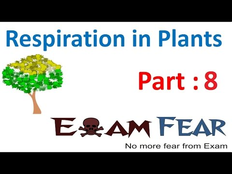 Biology Respiration in Plants part 8 (Glycolysis: ATP yield, Aerobic Respiration) CBSE class 11 XI
