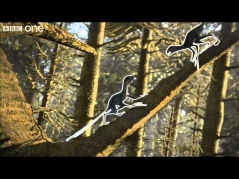 Feathered Epidexipteryx - Planet Dinosaur - Episode 2  - BBC One