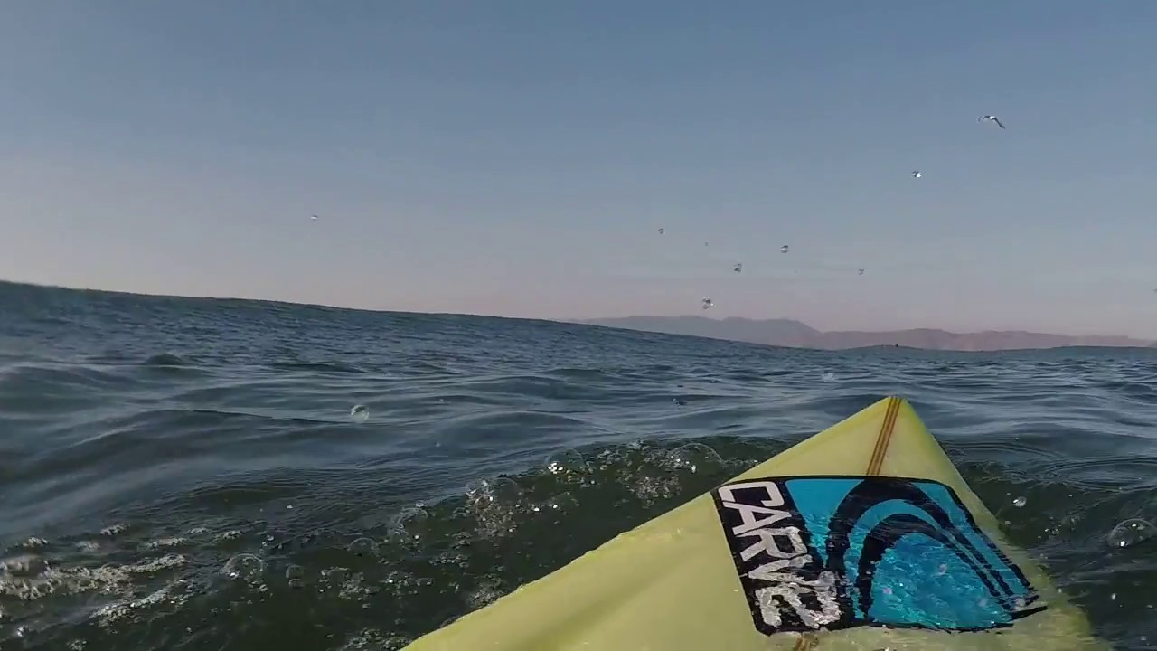 Great White Shark Big Wave Surfer Have An Encounter Ocean Beach San Francisco Dec2017