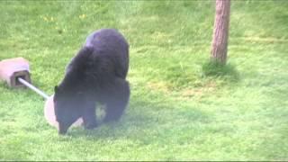Bear!.mov