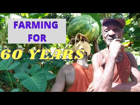 FARMING FOR 60 YEARS | JAMAICAN FARMER | WALKING TO BUSH | BETHSALEM | ST. ELIZABETH | JAMAICA VLOG