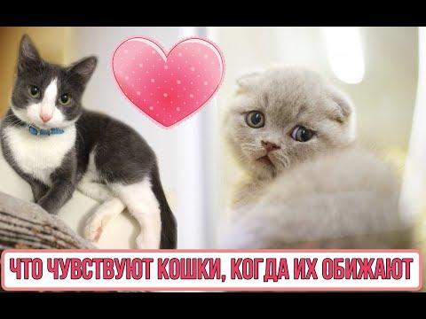 Вопрос: Почему кошка обижается на хозяина?