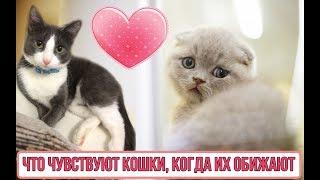 Что чувствуют кошки когда обижаются / Обижаются ли кошки?