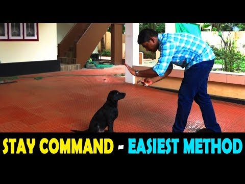 dog training : ' STAY'  Malayalam : kerala dog training : വളര്ത്തു നായയെ പരിശീലിപ്പിക്കാം