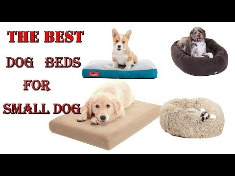 dog-beds-for-small-dogs-2019-||-dog-beds
