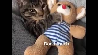 LOVE PETS - P.10