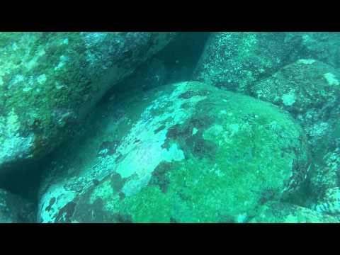 Sri Lanka, Hikkaduwa, Dive #2