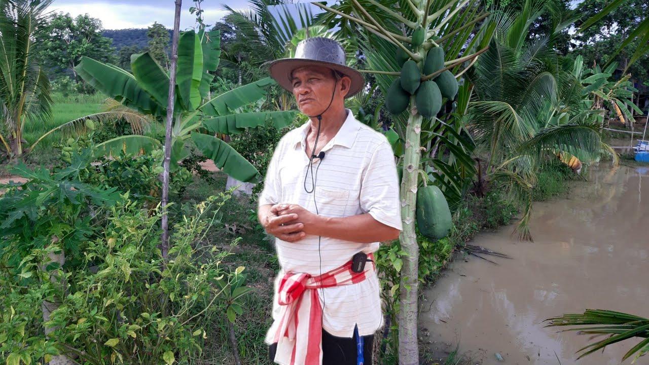 เศรษฐกิจพอเพียงเลี้ยงชีวิตได้จริง!!ทำเกษตรมีรายได้ตกเดือนละ2หมื่นอยู่ได้สบายๆ..ชีวิตดีมีความสุข