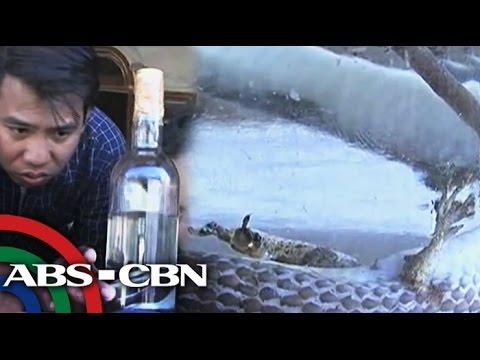 Umagang Kay Ganda: Ahas na may paa, nahuli sa Isabela