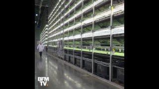 Sans terre et sans soleil, voilà comment poussent ces salades high-tech à New York