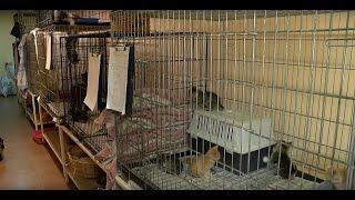 В приюте для животных сезон котят