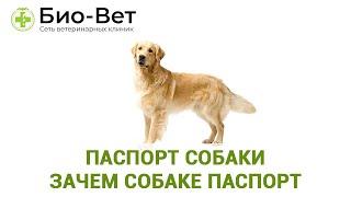 Паспорт Собаки & Зачем Собаке Паспорт. Ветклиника Био-Вет