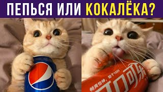 Приколы с котами. ПЕПЬСЯ ИЛИ КОКАЛЁКА? | Мемозг #288