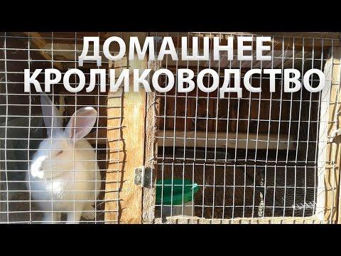 Содержание кроликов в домашних условиях содержание видео