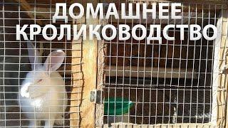 Содержание и разведение кроликов в домашних условиях - видео советы.(Видео про содержание и разведение кроликов в домашних условиях. Специально для начинающих кролиководов..., 2015-10-24T13:15:27.000Z)
