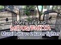 Murai Batu Vs Dua Kacer Fighter  Mp3 - Mp4 Download