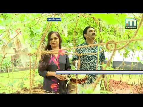 Kozhikode Collector Set Example; Starts Organic Farm At Home | Mathrubhumi News