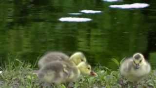 прекрасная природа птицы дикой природы США Америки