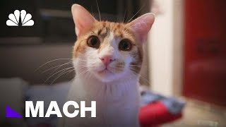 Have You Ever Wondered How Your Pet Sees The World? | Mach | NBC News