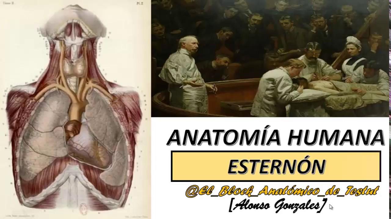 Magnífico Grises Serie Anatomía 2 Colección - Anatomía de Las ...