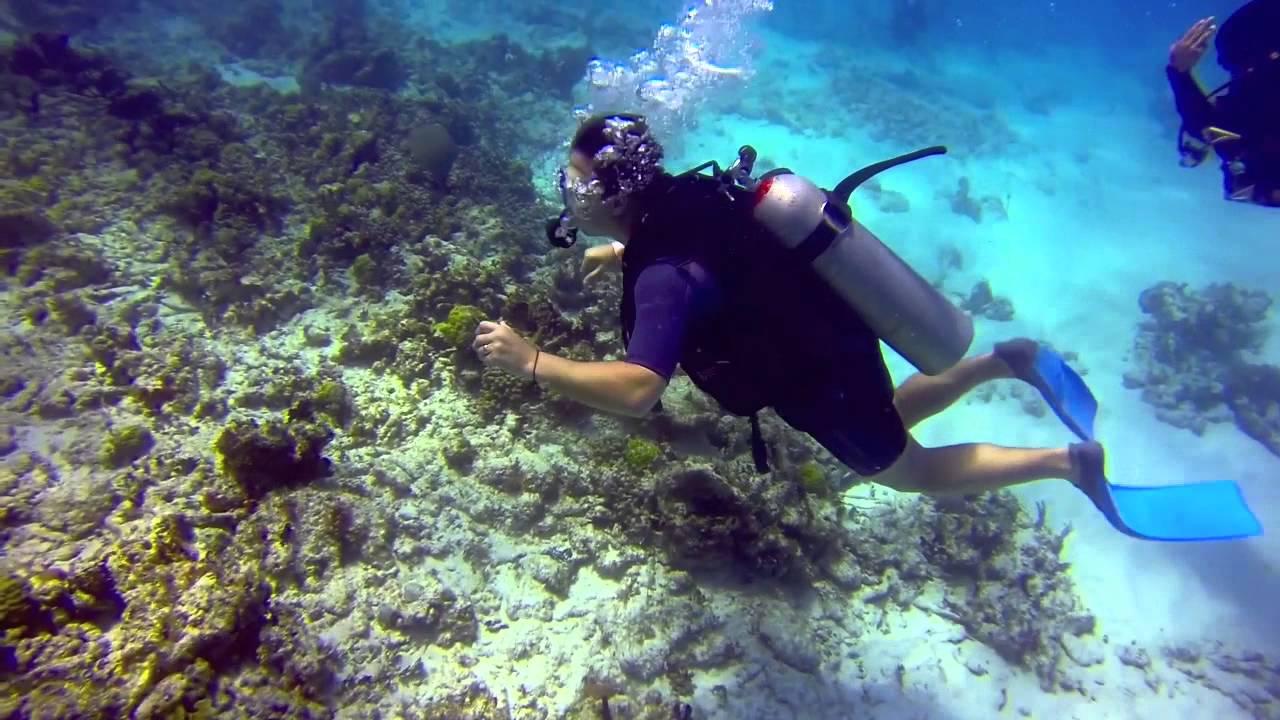 水肺潜水_Scuba diving in Cancun, Mexico, June 2013 - YouTube
