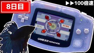 【8日目】100倍速再生 お魚と視聴者でポケモンクリア_Play Pokémon with viewers and fish【振り返り】