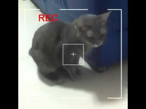 แมวเทา EP.2 การส่งฝาอิชิตัน เปลี่ยนชื่อด้วย