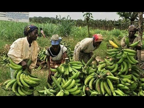 INVESTIR AU CONGO - LE DÉFI AGRICOLE : LES ENJEUX ET LES RISQUES