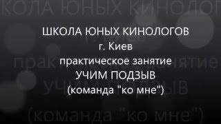 Школа юных кинологов  г. Киев  Команда ко мне, обучение, ошибки дрессировщика (самоед, доберман)