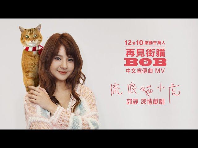 【再見街貓BOB】電影中文宣傳曲MV:郭靜Claire〈流浪貓小虎〉 | 感動全球真實故事,和街貓BOB的大銀幕最後相遇!