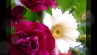 花 【カラオケ録音によるカバーです】 石嶺聡子 / 夏川りみ(オリジナ...