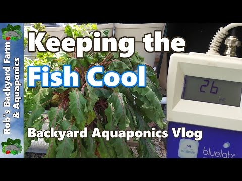 Keeping the Fish Cool in the Backyard Aquaponic System