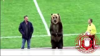 Героем популярного ТВ шоу в США стал медведь из Пятигорска