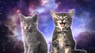 Котята поют