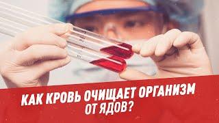 Как кровь очищает организм от ядов? — Шоу Картаева и Махарадзе