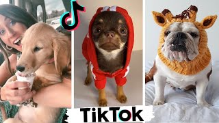 Cute Puppies of TikTok ~ Dogs Doing Funny Things Compilation