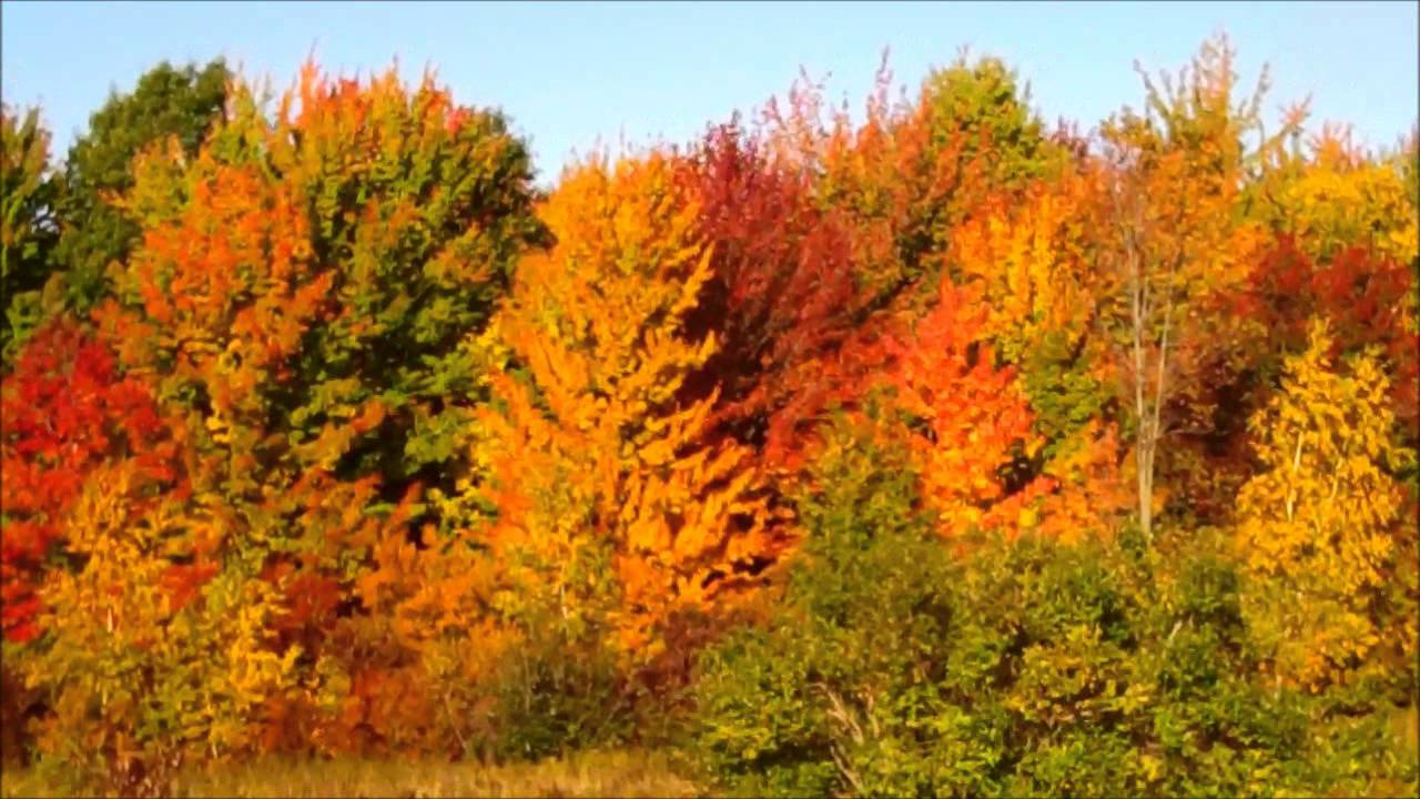 Fall Colors Clark County Mead Wisconsin Sept 22 2014 Doovi