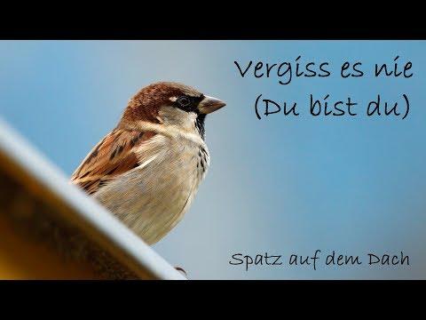 Vergiss es nie (Du bist du) - Lyric Video | Spatz auf dem Dach