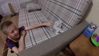 Коты и Дети 😻 Любовь детей к кошке 🐱Шотландская Вислоухая Кошка Хлоя