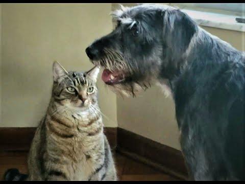 Funny Talking Dog Cat Fight