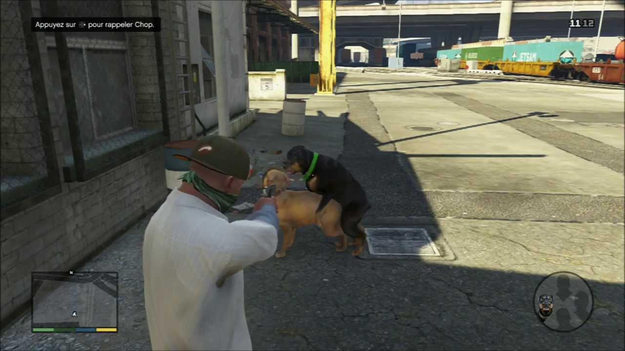 Voila le chien de GTA 5 - YouTube