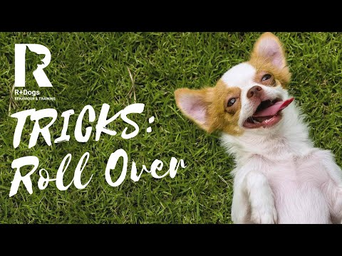 Tricks: How to Teach Your Dog to ROLL OVER