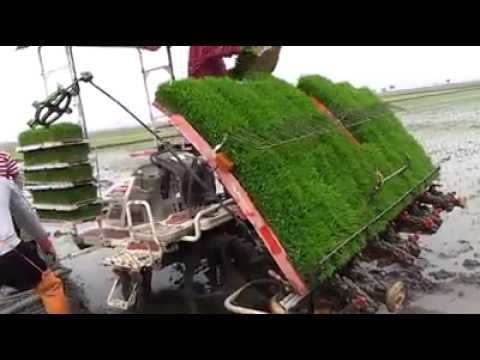 RICE TRANSPLANTING TECHNOLOGY BY PADDY TRANSPLANTER