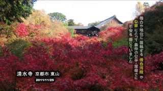 義仲 巴 ゆかりの地を 訪ねて 「大山祇神社」