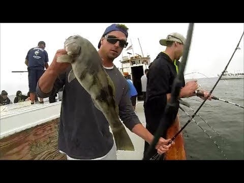 Putting on a sand bass clinic with point loma sportfishing for Point loma sportfishing fish count