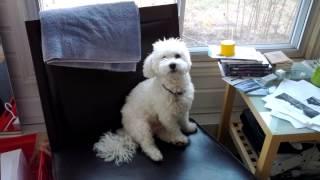 Dog Sits Like Stuffed Animal - Dawson