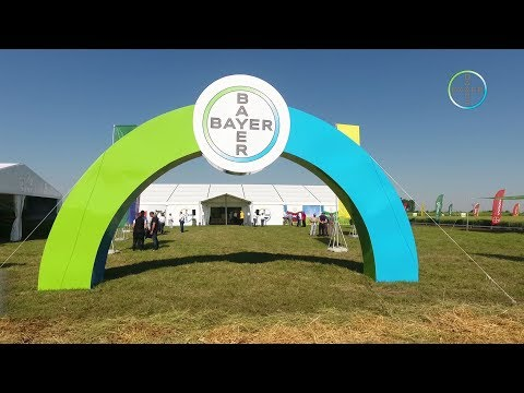 Bayer Arena - Insuratei 2017