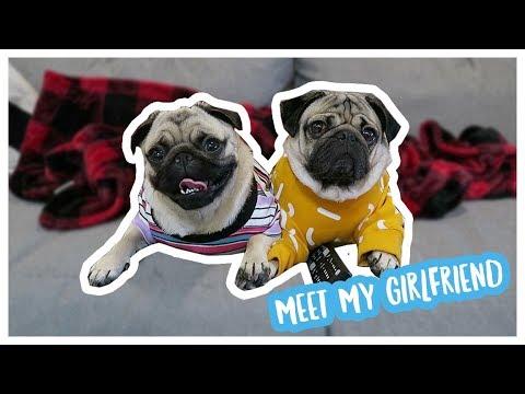 Meet My Girlfriend - Doug The Pug