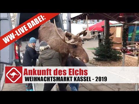 Kassler Weihnachtsmarkt: die Ankunft des Elchs.